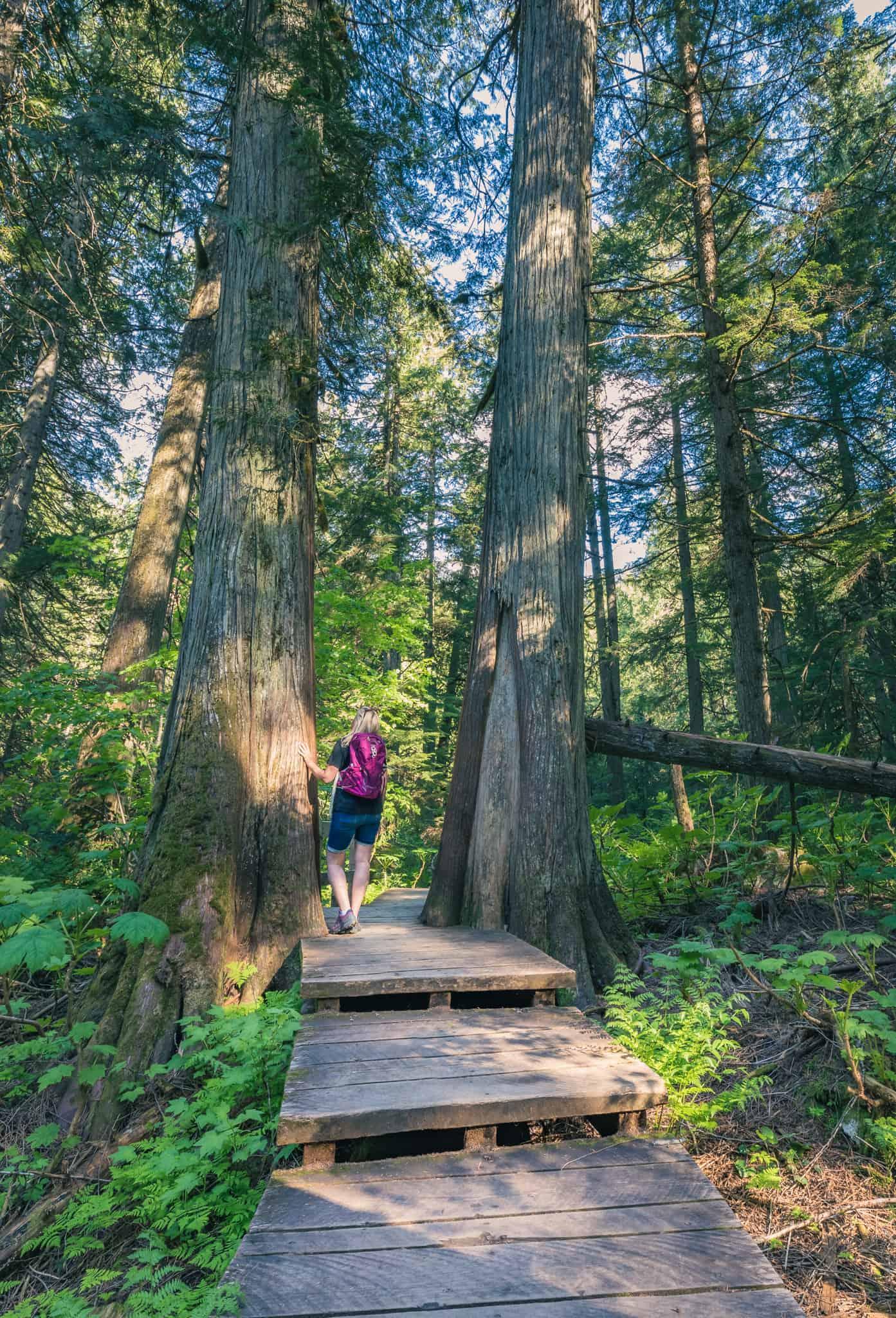 Giant Cedars Boardwalk Revelstoke