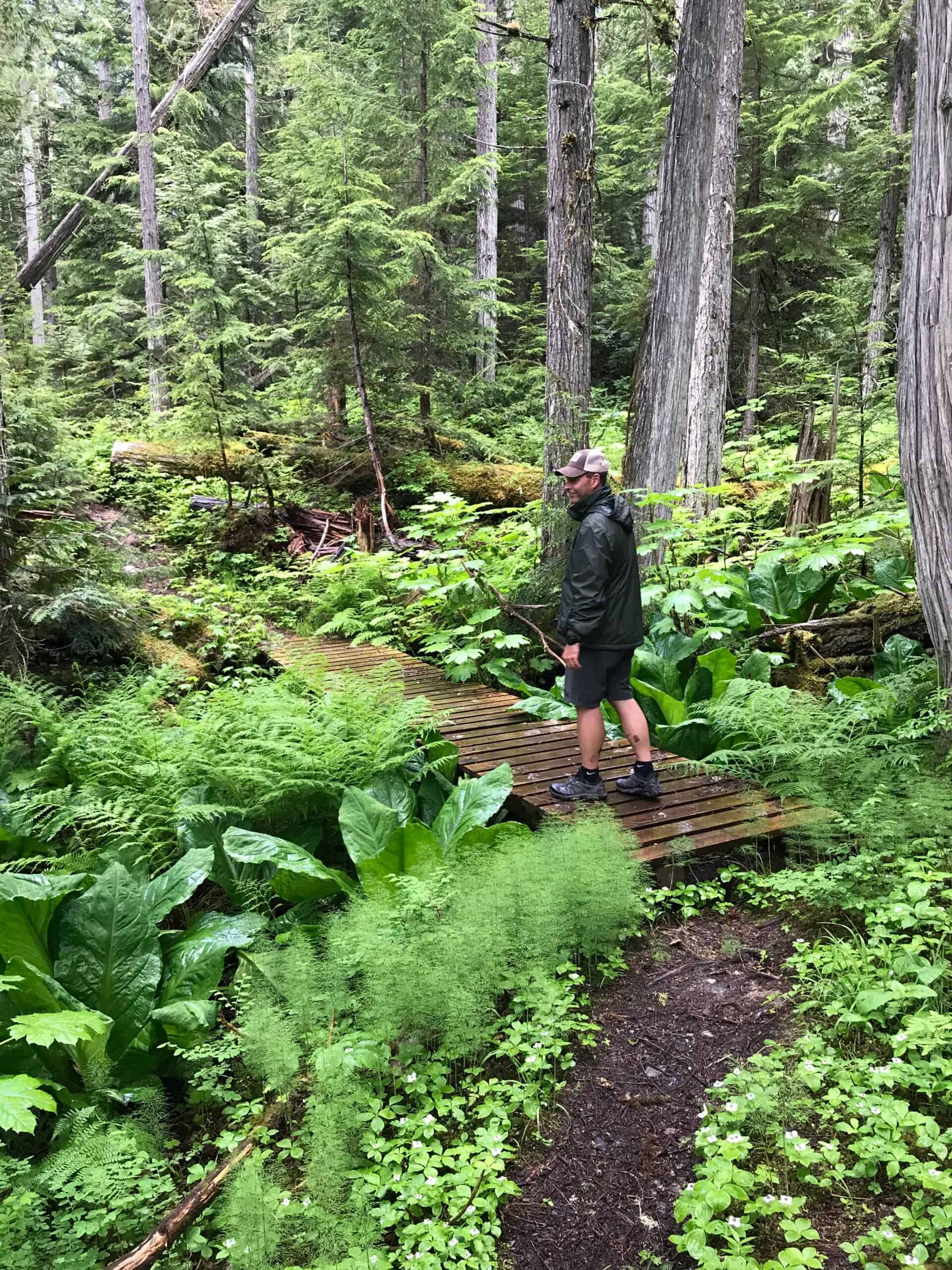 Hiking in Wells Gray Provincial Park